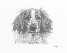 SPRINGER SPANIEL (4) dog L E art drawing prints  2 sizes A4/A3 & Card available