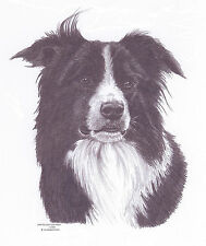 BORDER COLLIE Ltd Edit art drawing print 2 sizes A4/A3 &  card available