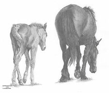 MARE & FOAL(2) LE art drawing prints  2 sizes A4/A3 &  Card available