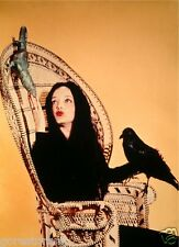 THE ADDAMS FAMILY TV Poster Morticia The Munsters Lurch Fester Goth Horror