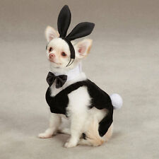 casual Canine Party Hounds Bunny Halloween Dog Pet Costume Black + Bunny Ears