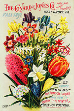 Canvas Prints 1800s Fall Window Garden Seed Packet Flowers Bulbs Print Picture