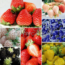 100 PCS Strawberry Seeds Nutritious Delicious Blue Black Fruit Vegetables Seed W