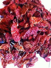 Bhut Jolokia Dried Ghost Pods NagaLand Chillies - The Hot Pepper Company