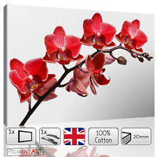 LARGE RED FLOWERS ORCHID WHITE BACKGROUND CANVAS WALL ART PRINTS PICTURES FRAMED