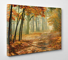 Nature Autumn Forest Photo Canvas Print Wall Art Ready to Hang Large A1 A2 A3 A4