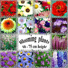 "Perennial and annual blooming plants 60 - 75 cm or 24""- 29"" height, Flower seeds"