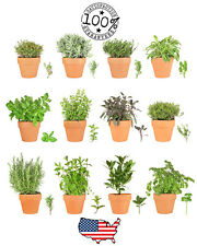Select your Heirloom Herb Seeds by Variety - USA Non GMO - Fast Shipping