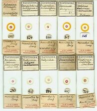 Various spp. Diatoms from Various Locations Microscope Slides by Thomas E. Doeg