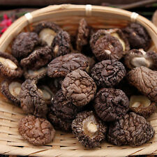 Dried Shiitake Mushrooms Organic Grown Mushrooms Premium Natural TopGrade Fungus