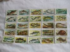 BROOKE BOND TEA CARDS:FRESHWATER FISH:BLACK BACK:BUY INDIVIDUALLY NO's 26 - 50