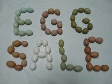 10 blown eggs plus 2 free eggs! 1 hole each. Some sets w/ blue, green, olive etc