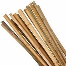 600mm Length Natural Bamboo Garden Stakes 13/15mm Plant Trellis - 50 to 500