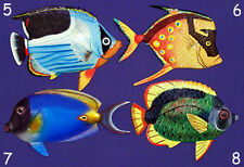 "Tropical Fish Wall Plaque 6""X4""~ Nautical Beach Sealife Decor ~ (54) Selections!"