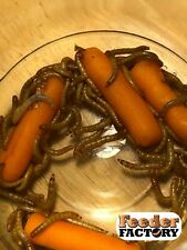 Live Mealworms!  Free shipping! Different sizes, different counts.