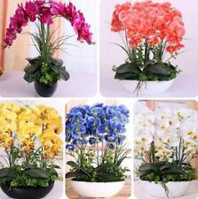 orchid seeds flower plants Phalaenopsis Orchids Seeds -100 PCS