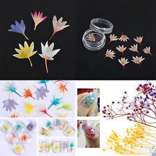 Dried Baby's breath Flower 3D Nail Art DIY Manicure Decoration Tips Glass Bottle