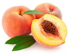 Peach Kernel Oil -PURE - various sizes available