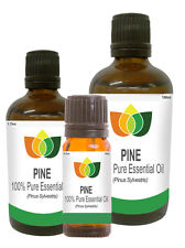 100% Natural Pine (Needle) Essential Oil - Multi Size, FREE P&P (Aromatherapy)