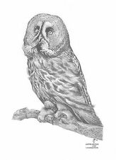 GREAT GREY OWL LE art drawing prints 2 sizes A4/A3 & cards Available