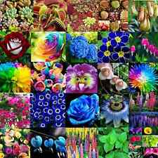 Various Flower Seeds Ideal Garden Potted Seed Rare Flower Plant Ornamental Decor
