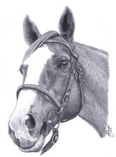 HORSE Equine Ltd Edition art drawing print  2 sizes A4/A3 & Card Available