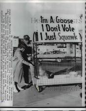 1960 Press Photo Caged Goose Encourages Michigan Election Voting, Grand Rapids