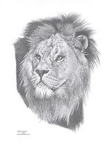 LION, LIONESS, LION CUB art drawing prints available in 2 sizes A4/A3 & card