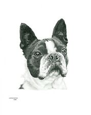 BOSTON TERRIER dog LE art drawing prints 2 sizes A4/A3 & cards available