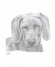 WEIMERANER dog Ltd Edition art drawing prints 2 sizes A4/A3 &  card available