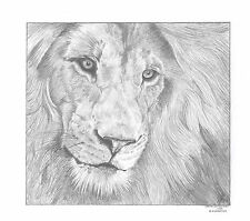 MALE LION (1) Ltd Edition art drawing print 2 sizes A4/A3 &  card  available
