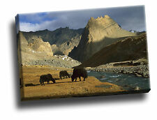 Grazing Yaks, Near Photoskar Village, Ladakh Giclee Canvas Wild Life Picture Art