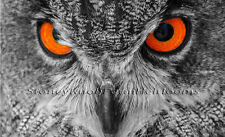 Owl Eyes ~ Birds ~ Counted Cross Stitch Chart