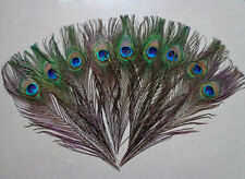 """50 PCS beautiful natural peacock feathers eyes 10-12"""" Inch"""