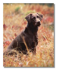 Chocolate Lab Puppy Dog Kids Room Animal Wall Picture