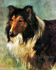 Collie Portrait ~ Dogs ~ Cross Stitch Fine Art Pattern