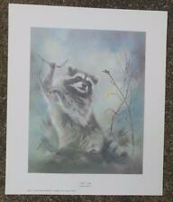 "Vintage Collector's Print Night Song  by Betty Allison 1979  11 x 13"" Raccoon"