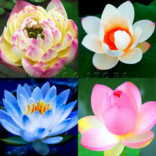 10pcs Lotus Seeds Water Flower Aquatic Plants Fragrance Blooming Hot Sell