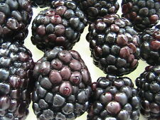 5-15 Fruit Seeds U Choose (Part 3) Good Selection of Hardy Fruit Varieties