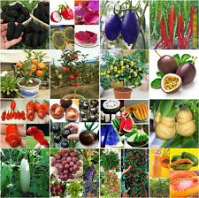 Rare Colorful Watermelon Strawberry Vegetable Fruit Seeds Potted Home Garden