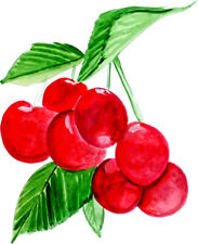 Cherries Fruits Graphics Vinyl Decal - Auto Car Truck Home RV ATV Boat Cell Cup