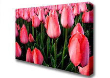 Pink Tulips Cultivation Floral Canvas Print Wall Art A2 Size 04888