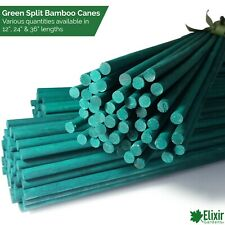 Green Split Canes Support Sticks Plant Garden Lily Bulb Flower 12 24 & 36 Inch
