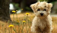 Cute puppy dog wallpaper art Poster Kids PERSONALIZE FREE