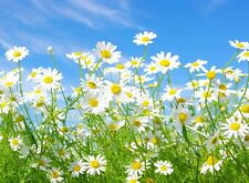 Spring time daisy landscape scenery wall art Poster personalized Free floral