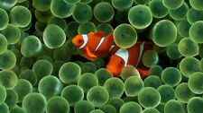 Tropical Exotic Clown Fish Home Decor Poster Wall Art Decor PERSONALIZE FREE
