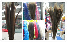 10-100 pcs natural pheasant tail feather 15-60 cm variety of optional specificat