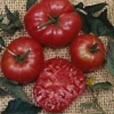 Heirloom Tomato Seeds - Plant Tomatos In Your Survival Vegetable Garden 26 Types