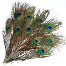 10/20/30/50/100/200pcs Real Natural Peacock Eye Tail Feathers about 10-12 Inches