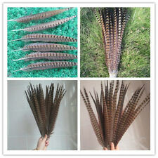 Wholesale beautiful pheasant tail feather 10-100 pcs 12-24 inches / 30-60 cm